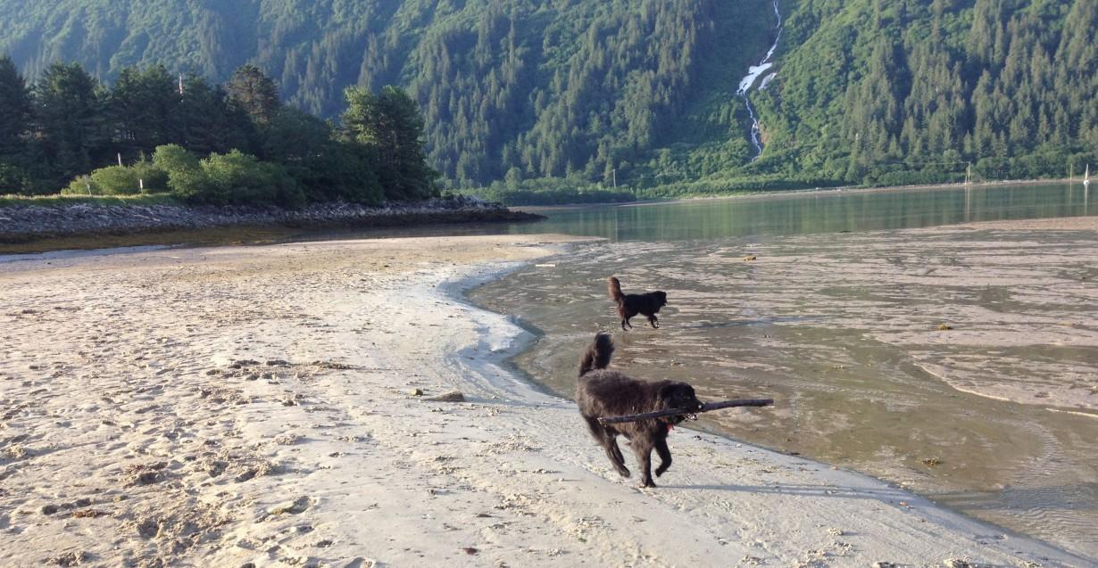 Beachdogz Home